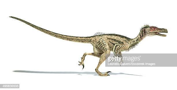 velociraptor dinosaur on white background with drop shadow. - velociraptor stock illustrations