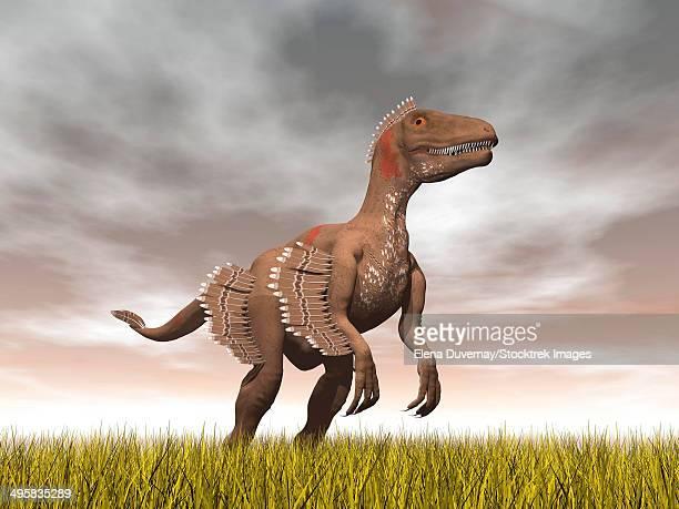 velociraptor dinosaur standing in the yellow grass. - velociraptor stock illustrations