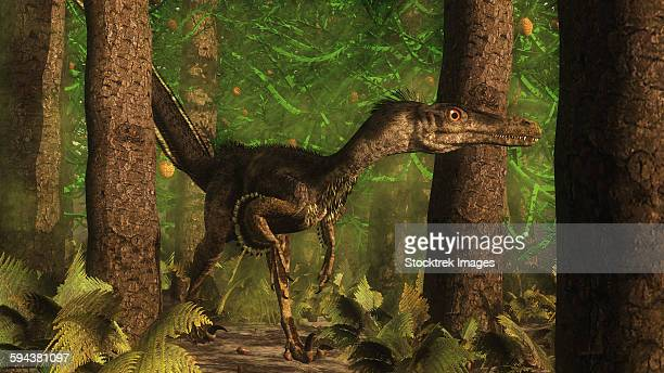 velociraptor dinosaur stands alert in an araucaria tree forest. - paleozoology stock illustrations