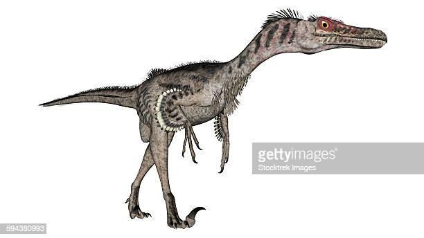 ilustraciones, imágenes clip art, dibujos animados e iconos de stock de velociraptor dinosaur, white background. - paleobiología