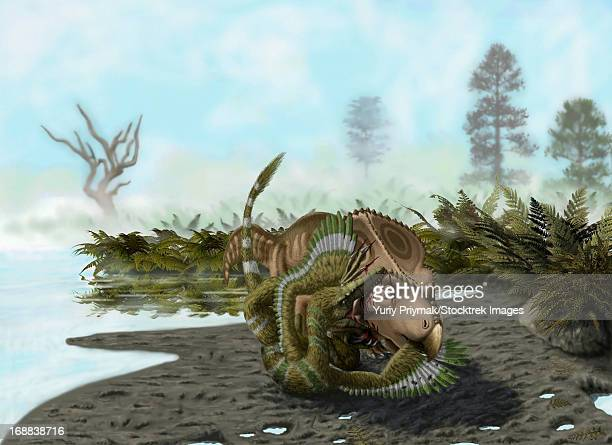 A Velociraptor mongoliensis attacks a Protoceratops andrewsi.