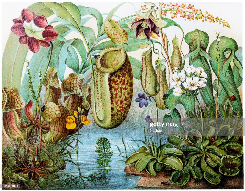 Pitcher plants stock photos pitcher plants stock images