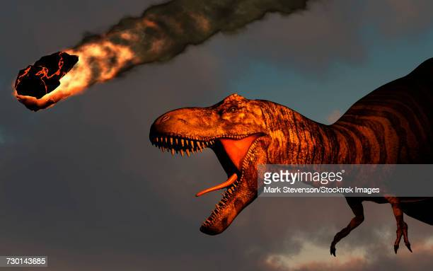 a vicious t-rex dinosaurs observing a falling asteroid. - paleozoology stock illustrations