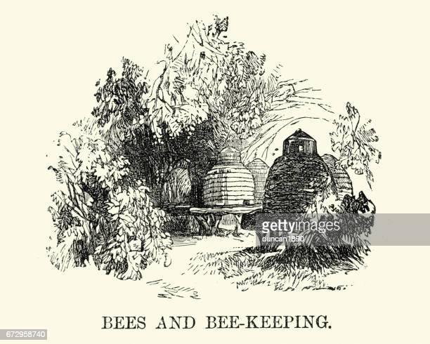 illustrations, cliparts, dessins animés et icônes de ruches victorienne - ruche
