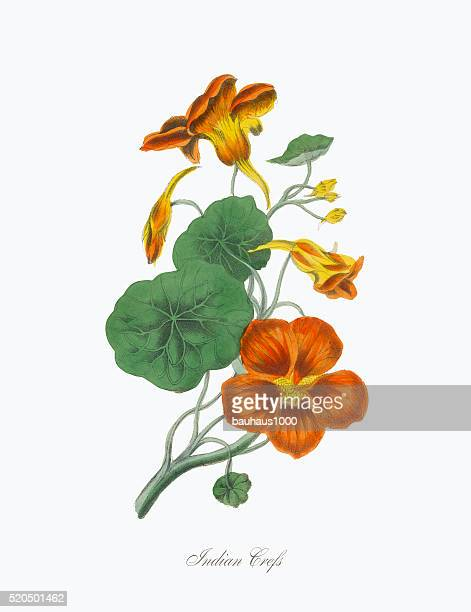 illustrations, cliparts, dessins animés et icônes de illustration de style victorien crefs de plantes indiennes - exotisme