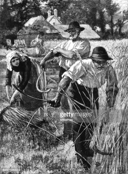 Victorian country folk cutting wheat