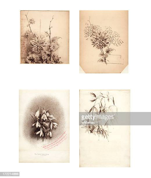 Victorian  /  Edwardian flower illustrations