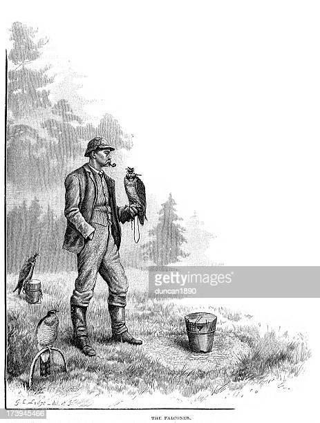 victorian falconer and hawk - peregrine falcon stock illustrations, clip art, cartoons, & icons