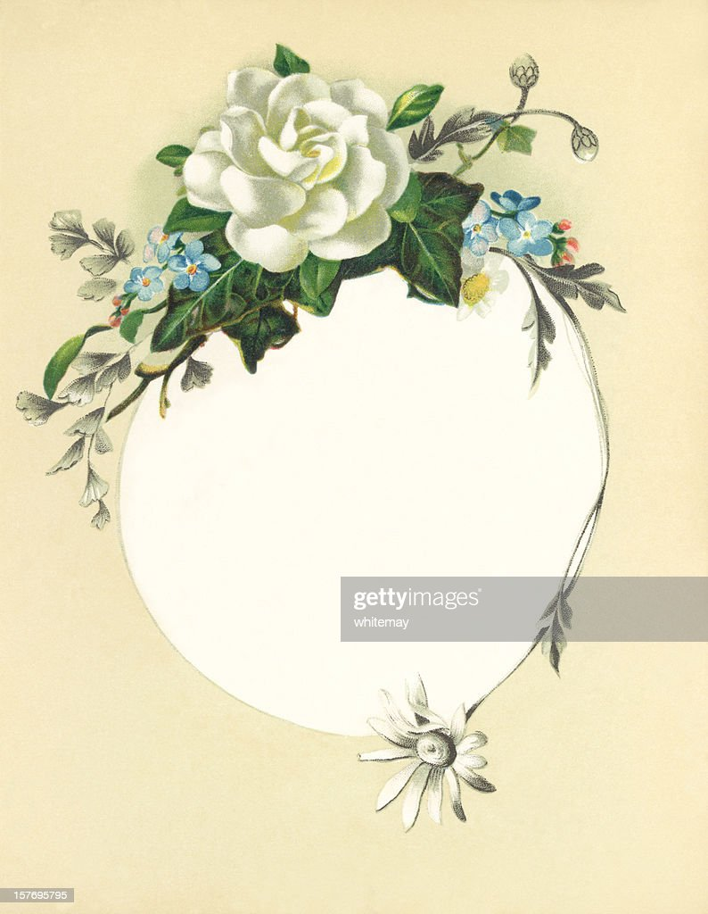 Victorian Flower Illustration With White Rose Stock