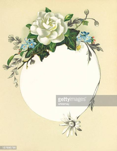 Victorian flower illustration with white rose