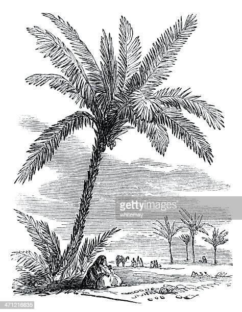 Victorian ilustración-oasis en el desierto