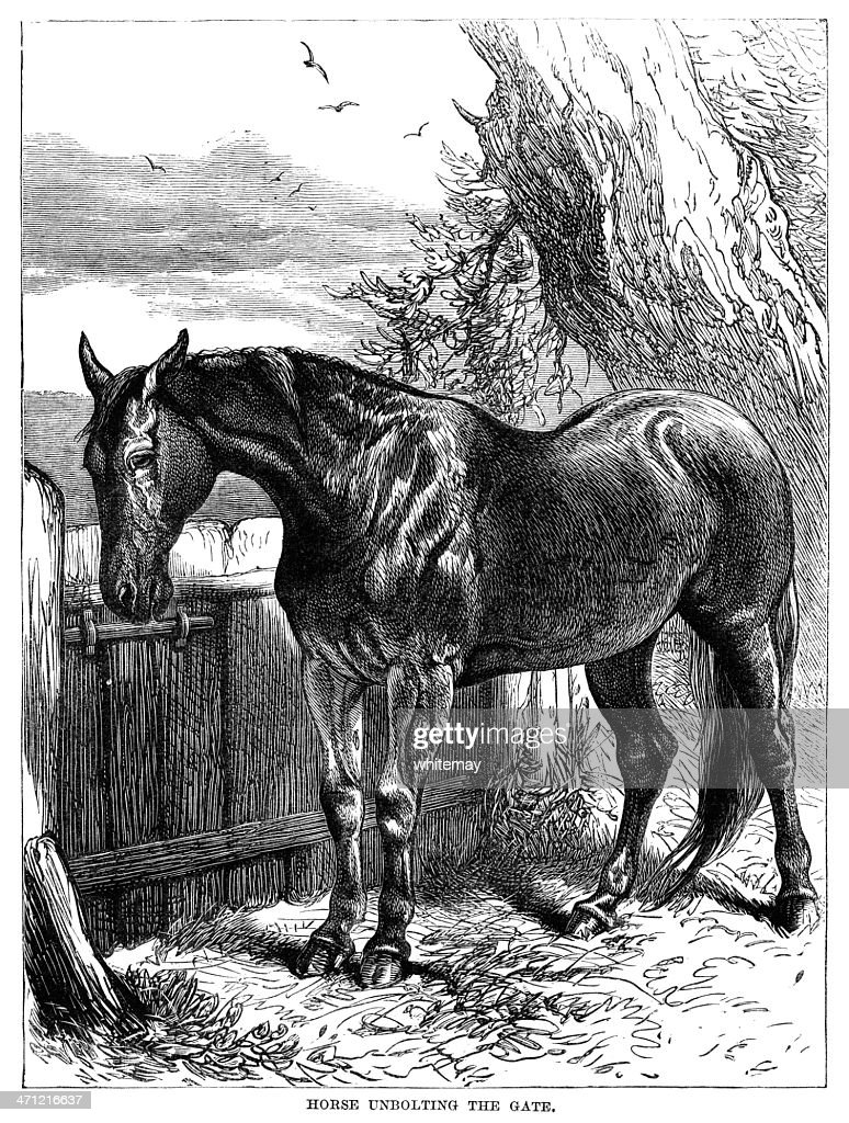 Victorian Illustration - Horse unbolting a gate : stock illustration