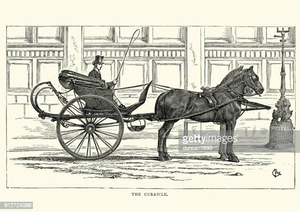victorian man driving a curricle carriage, 19th century - carriage stock illustrations