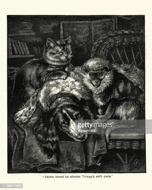 Victorian pets, Cat , dog and monkey, 19th Century