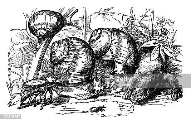 ilustraciones, imágenes clip art, dibujos animados e iconos de stock de victorian snails, insectos y lagarto - stealth