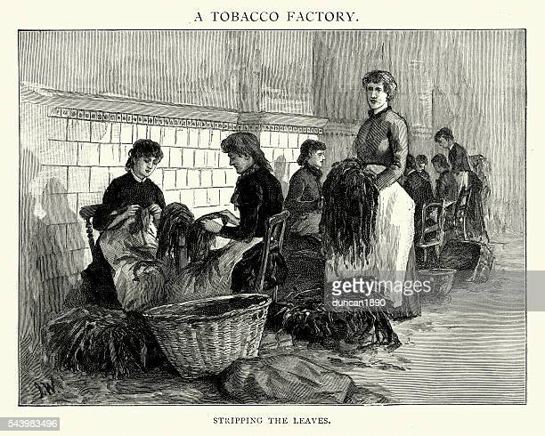 victorian tobacco factory workers stripping leaves - tobacco crop stock illustrations, clip art, cartoons, & icons