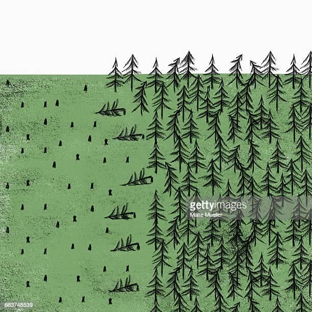 ilustrações de stock, clip art, desenhos animados e ícones de view of deforestation against white background - desmatamento