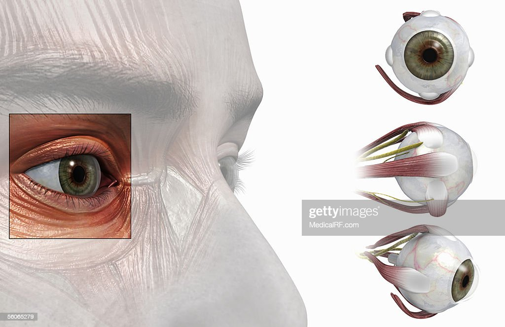 Views Of The Anatomy Of The Eye Stock Illustration Getty Images