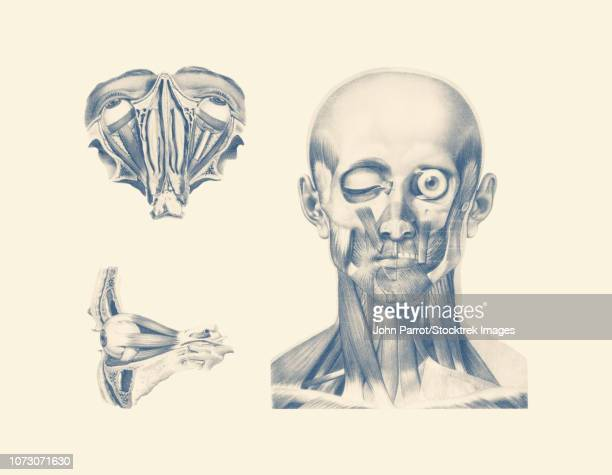 Vintage anatomy print showing multiple views of the human eyes.