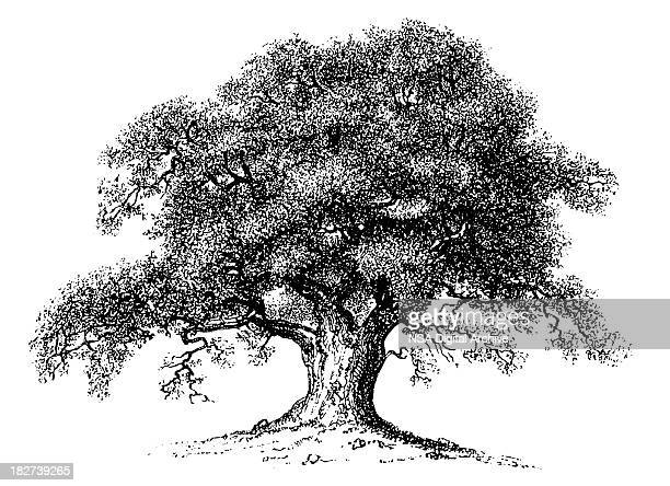 Vintage Clip Art and Illustrations | Oak Tree