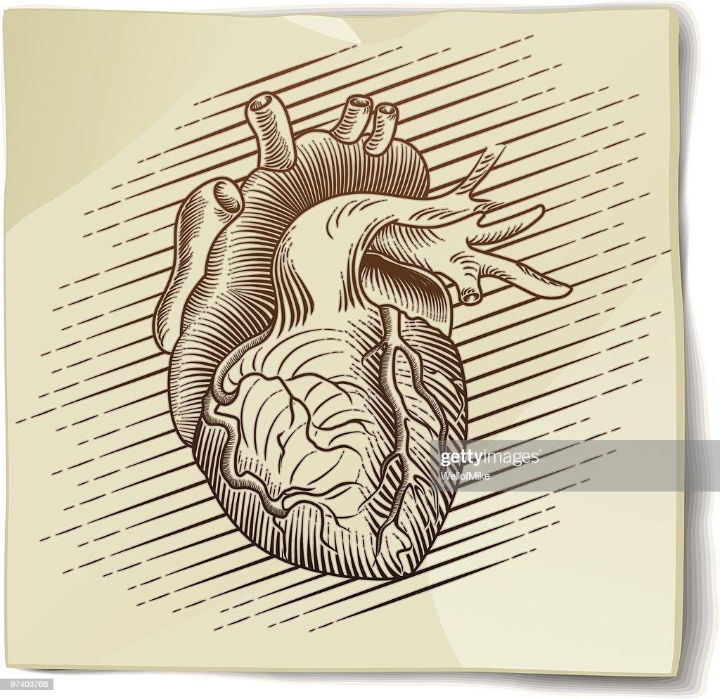 Vintage Heart Sketch on Paper