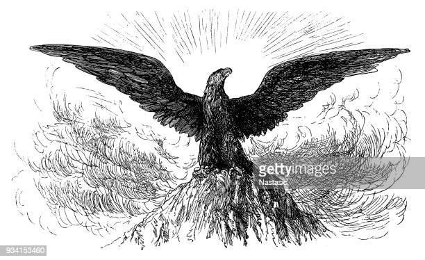 vintage style eagle - bald eagle stock illustrations