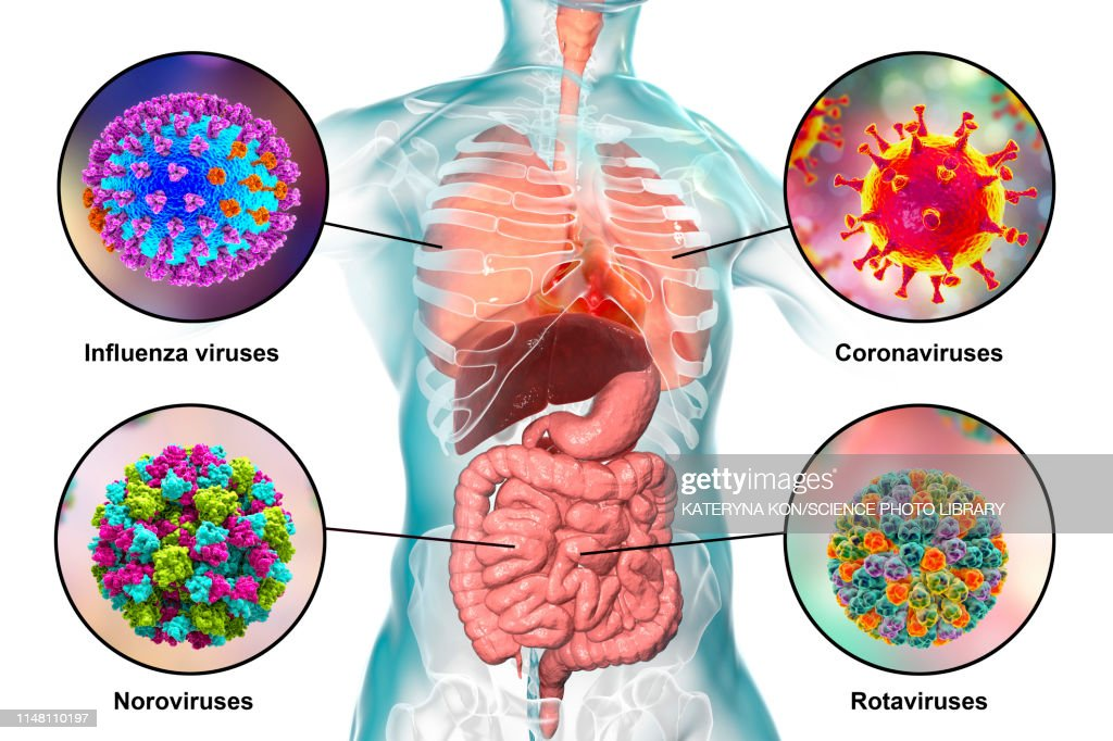 Viral respiratory and enteric infections, illustration : Stock Illustration