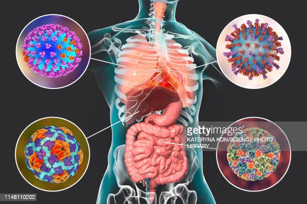 viral respiratory and enteric infections, illustration - human digestive system stock illustrations