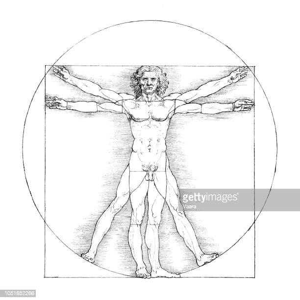 vitruvian man b&w - the human body stock illustrations