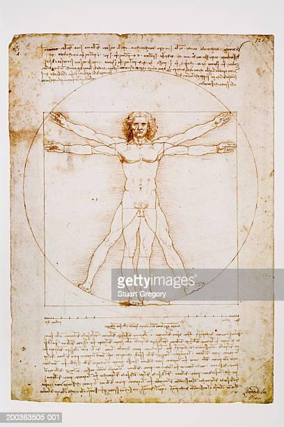 ilustraciones, imágenes clip art, dibujos animados e iconos de stock de vitruvian man by leonardo da vinci - leonardo da vinci
