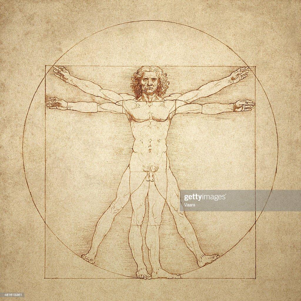 ヴィトルヴィウス的人間がレオナルド・ダ・ヴィンチ : ストックイラストレーション