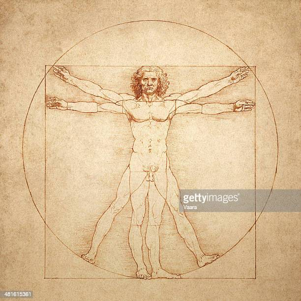 vitruvian man by leonardo da vinci - anatomy stock illustrations