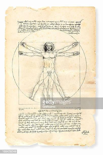 ilustraciones, imágenes clip art, dibujos animados e iconos de stock de el hombre de vitruvio pintado por leonardo da vinci de 1492 - leonardo da vinci