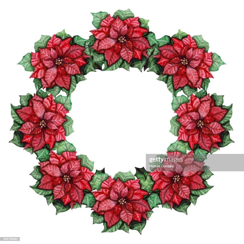 Lebendige Kranz Mit Aquarell Leuchtend Roten Weihnachtsstern Stock ...