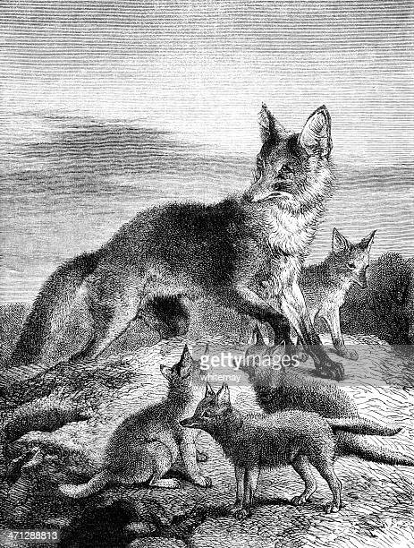 Vixen with cubs (Victorian engraving)
