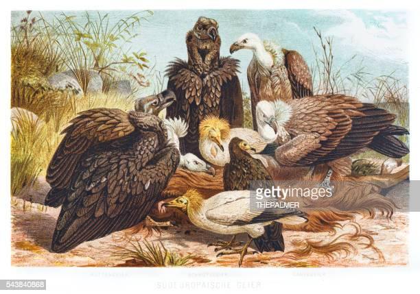 vultures illustration 1882 - bird of prey stock illustrations, clip art, cartoons, & icons