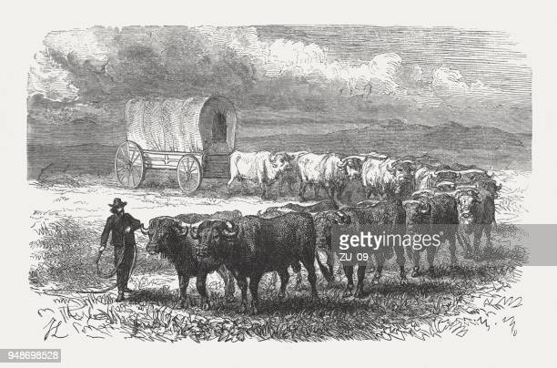 wagon trail on the prairies, wood engraving, published in 1868 - prairie stock illustrations, clip art, cartoons, & icons