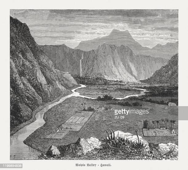 waipio valley, hawaii, wood engraving, published in 1899 - hawaiian waterfalls stock illustrations