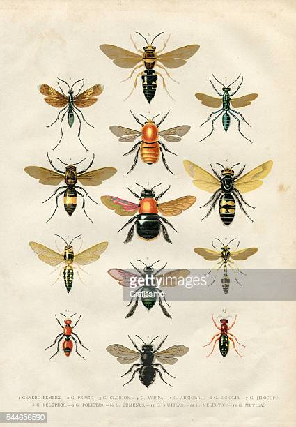 wasp bumblebee insects illustration 1881 - bumblebee stock illustrations, clip art, cartoons, & icons