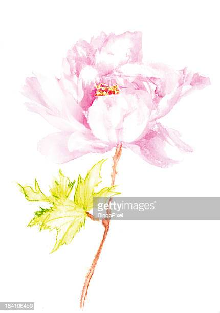 Water Coloured Peony Flower