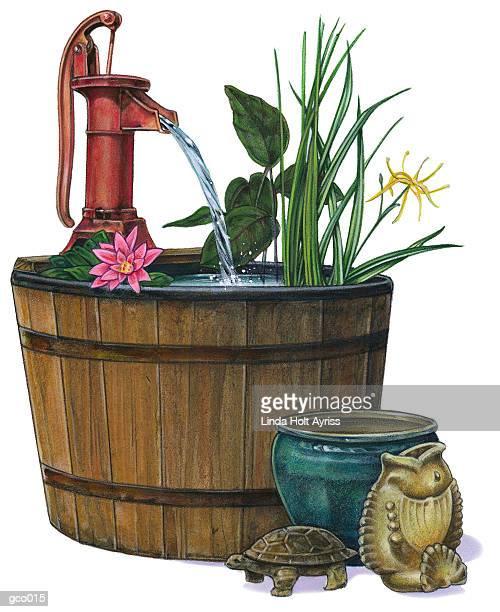 ilustrações, clipart, desenhos animados e ícones de water garden - organismo aquático
