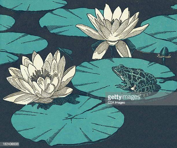 water lillies and toad - lily stock illustrations, clip art, cartoons, & icons