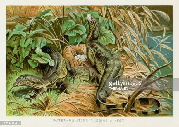 ilustraciones, imágenes clip art, dibujos animados e iconos de stock de agua monitor cromolitografía 1896 - animal egg