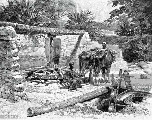Water pump Egypt in 1895