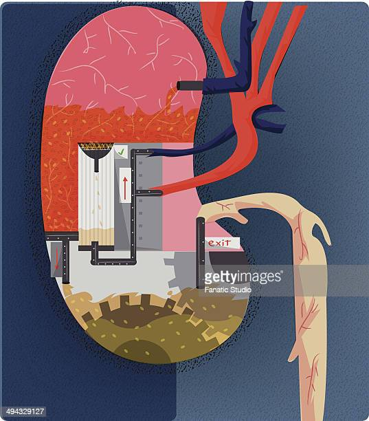 water treatment plant depicting function of kidney - water treatment stock illustrations, clip art, cartoons, & icons