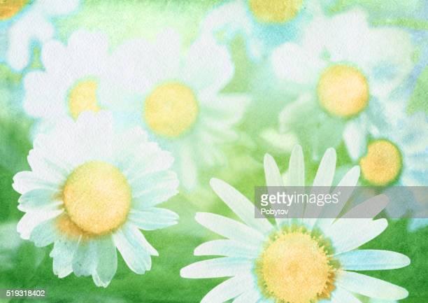 ilustraciones, imágenes clip art, dibujos animados e iconos de stock de acuarela fondo con margaritas - planta de manzanilla