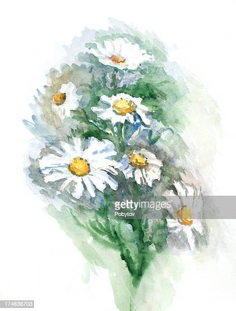 ilustraciones, imágenes clip art, dibujos animados e iconos de stock de camomiles acuarelas - planta de manzanilla