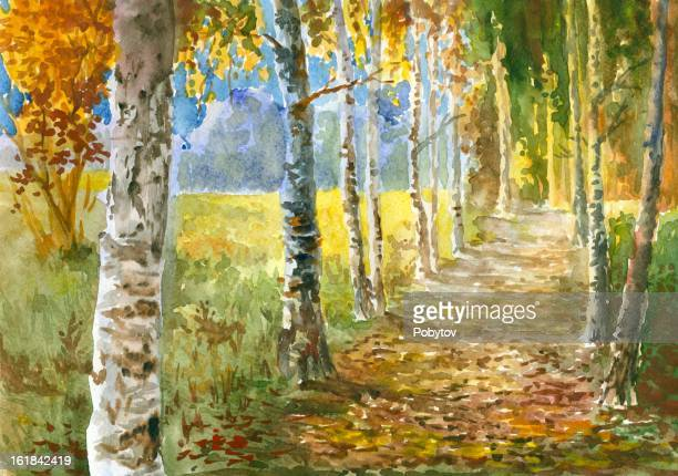 A watercolor drawing of a path flanked by fall birches