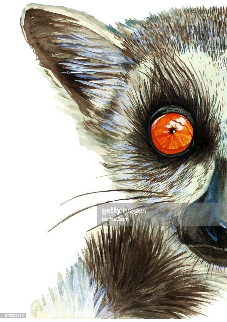 Aquarela Desenho De Animal Mamifero De Lemure Com Grandes Olhos