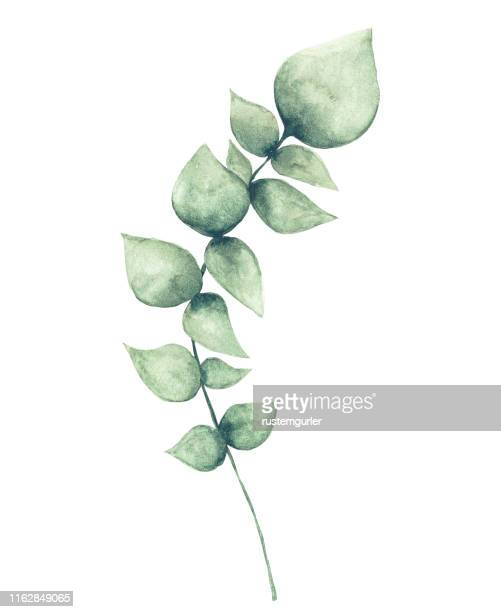 水彩ユーカリの葉 - ユーカリの葉点のイラスト素材/クリップアート素材/マンガ素材/アイコン素材